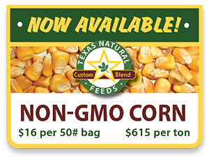 Non-GMO Corn is Now Available!