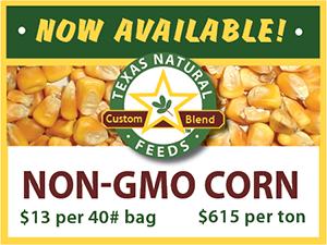 Non-GMO Corn Now Available
